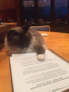 Bandit, studying history